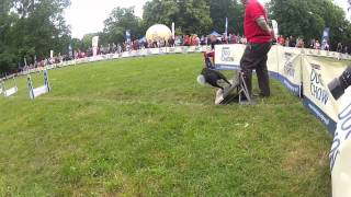 Flyball at DCDC Wroclaw 2012 Poland slow motion