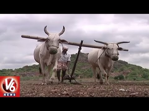 Farmers In Concern With Lack Of Rains In Warangal District | V6 News