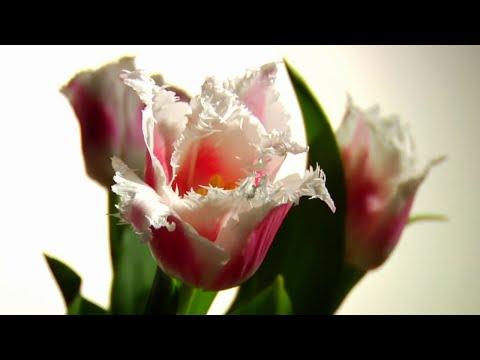 Timbaland - Apologize ft. OneRepublic HD 1080p