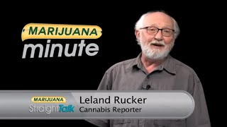 It's Not Your Grandfather's Marijuana Anymore ... Or Is It?