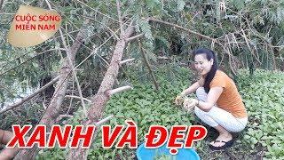 Nam Việt 733   Trồng rau sạch tại vườn nhà - ở quê thật tuyệt