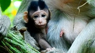 Mommy I Wanna Play!!!!   Baby Milto Ask Mum  Baby Milto Very Healthy, Strong,Fresh and Cute