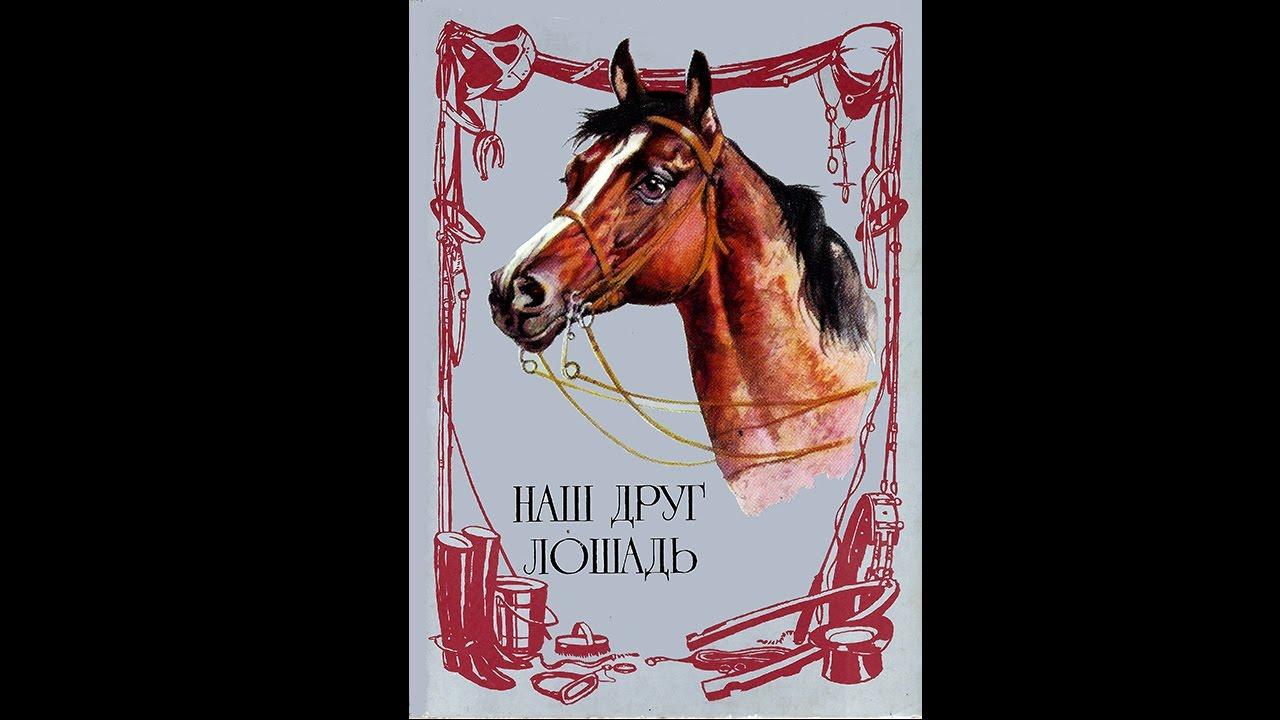 Лошадь наш друг открытки 34
