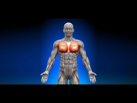 Desarrollo Y Crecimiento Muscular Del Pecho El Ejercicio Mas Efectivo