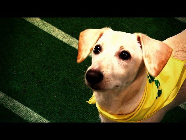 Puppy Bowl XI | Sunday Feb 1 3/2c