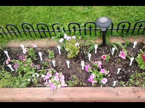 Remedy to keep cats out of flower beds