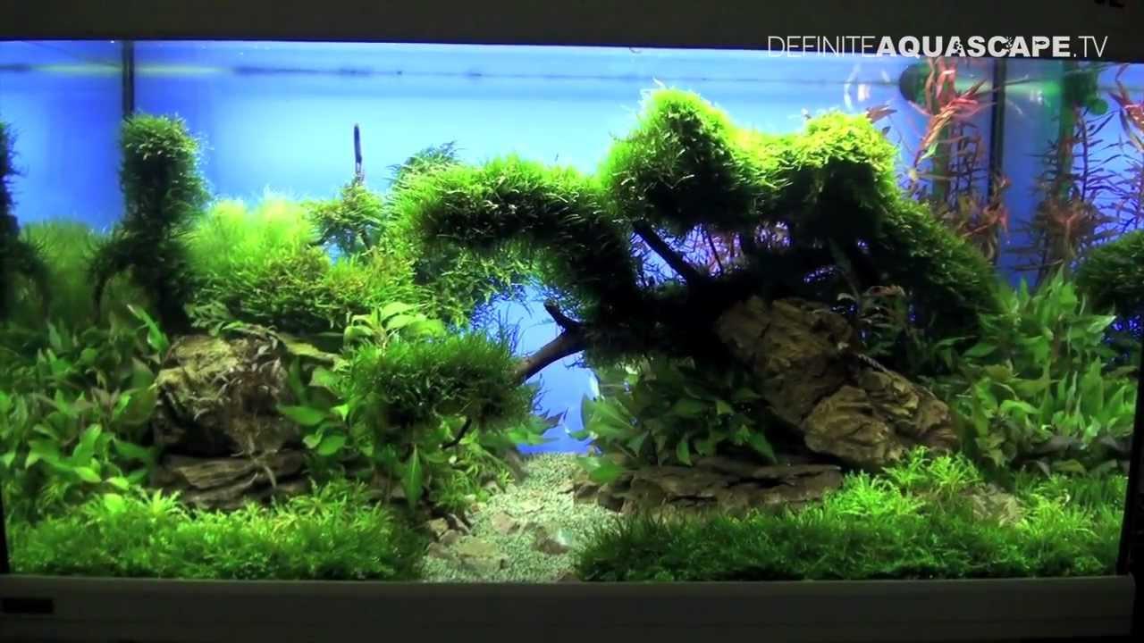 Aquascaping The Art Of The Planted Aquarium 2013 Xl Pt 3 Youtube