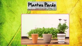 Plantas Pardo