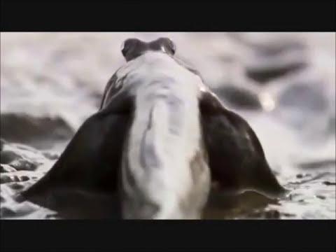 Evolução em vertebrados: peixes, anfíbios e répteis (Parte 1)