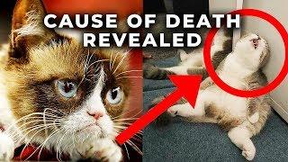 Grumpy Cat Death - The Disturbing Truth