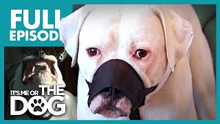 The Aggressive American Bulldog: Jed | Full Episode | It's Me or the Dog
