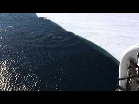 Minke Whale - McMurdo Sound