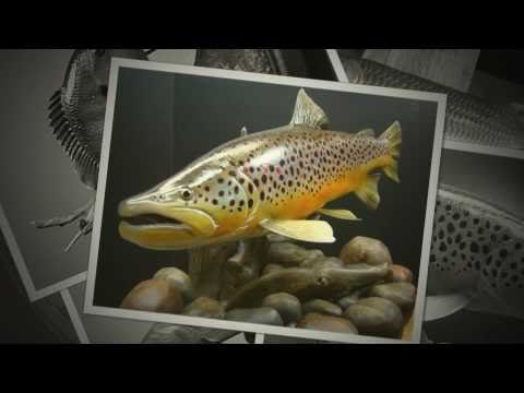Freshwater Fish Wood Carving Patterns