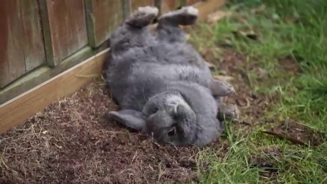 Maxi Bunny Crazy Happy... Demented Animals