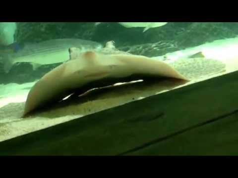 Stingrays , fish and tiger-sharks,oh my!