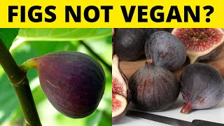 Foods You THOUGHT Were Vegan, But Arent!