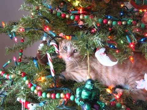 Funny Cats in Christmas Trees