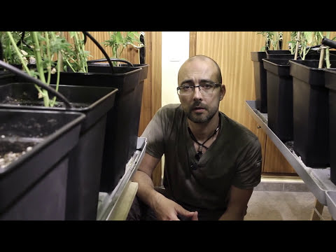 Marihuana Television News 13 - I ANIVERSARIO