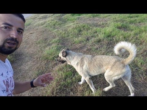 Başıboş Köpeklerle karşılaştımızda ne yapmalıyız.?