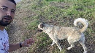 Başıboş Köpeklerle karşılaştığımızda ne yapmalıyız.?