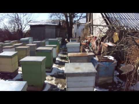 APICULTURA VIDEO PREZENTARE STUPINA
