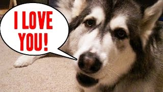 24 Pets Who Can Talk Like Humans