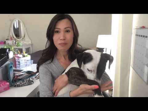 My Pit Bull Adoption Story