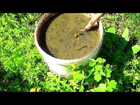 Лучшее удобрение. Зеленое удобрение вместо навоза. Как его сделать.