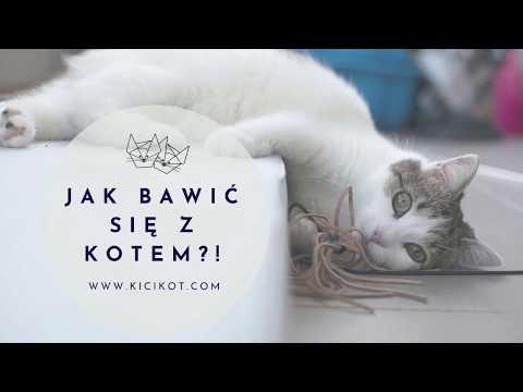 Kocie Porady - Jak Bawić Się Z Kotem?