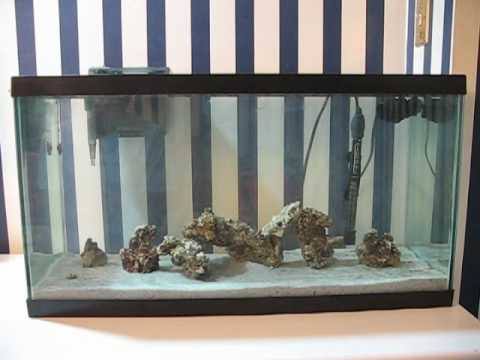 20 gallon saltwater aquarium startup update 1 youtube for 20 gallon saltwater fish tank