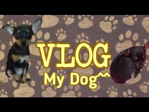 VLOG: Едем за щенком | покупаем щенка
