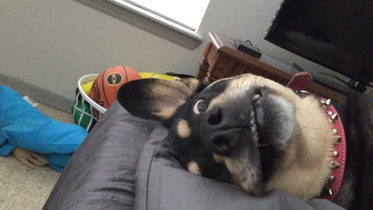 How To Make A Dog Fall Asleep
