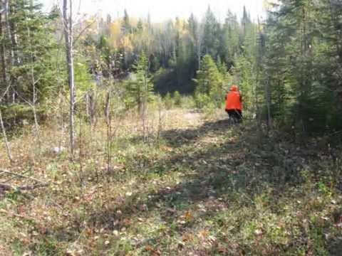 The sequel of our first team building (Kapuskasing hunting and shooting the ...