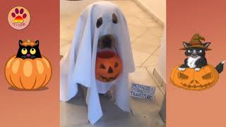Funny Animals in Halloween Costumes