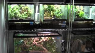 Breeding Center Update - Frog Room!