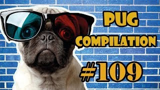 Pug Compilation 109  - Funny Dogs but only Pug Videos   Instapugs