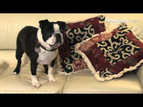 0 How To Protect Your Furniture From Pets