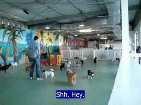 4 minutes at Doggy Day Care Sydney