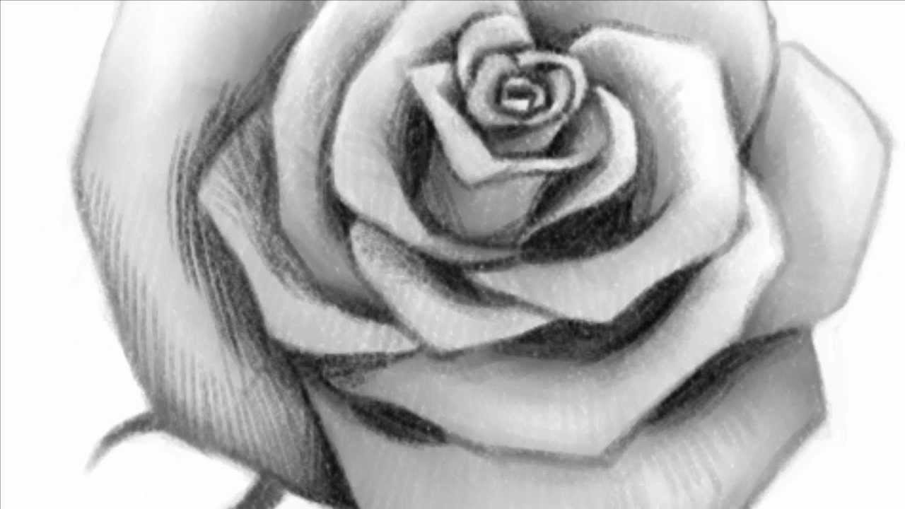 Big Roses Drawings How to Draw an Open Rose