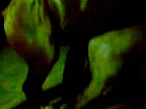 cavalo comendo égua pocotó 2