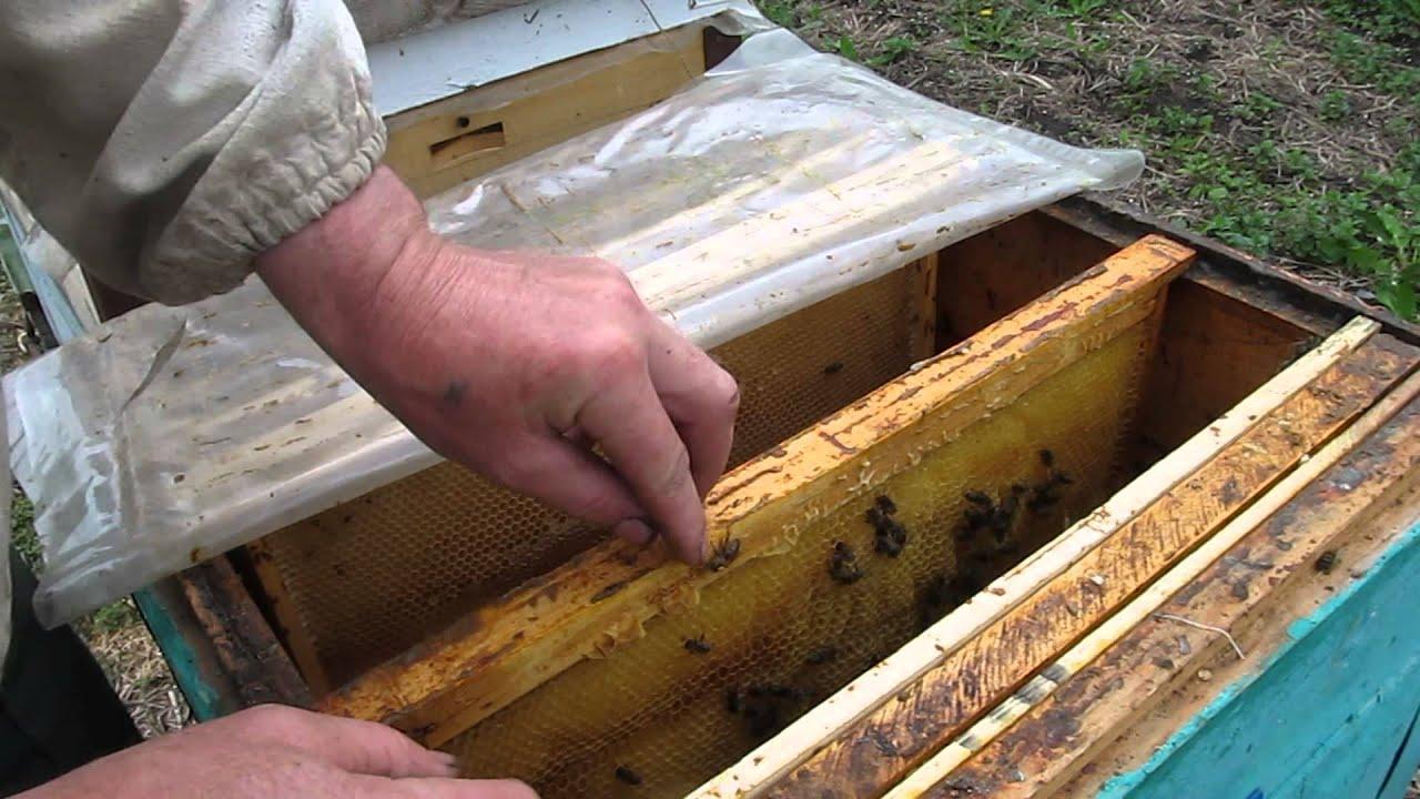 Как сделать отводок пчел Пасека. Пчелы. Мёд 24