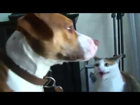Получает по морде от кота