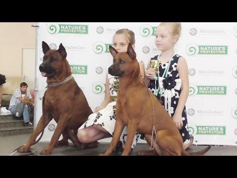 В Харькове прошла Международная выставка собак Созвездие большого пса