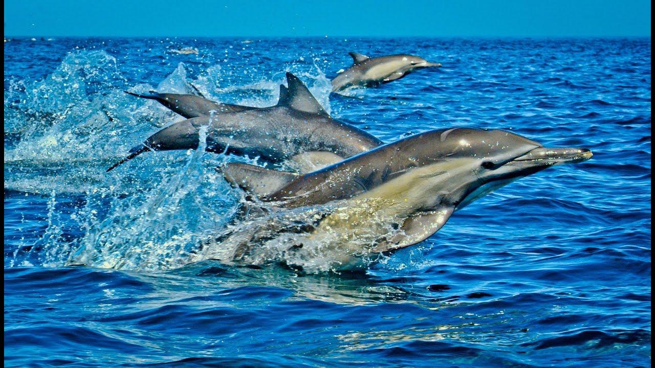Wasini Island Pictures Wasini Island Kenya hd