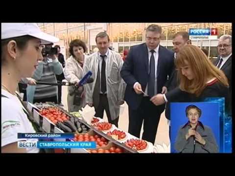 Ставропольские овощи круглый год