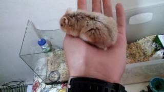 Hamster Son Durum