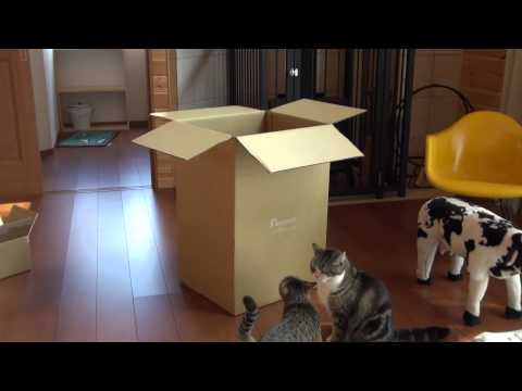 大きな箱とねこ3。-A large box and Maru&Hana.-