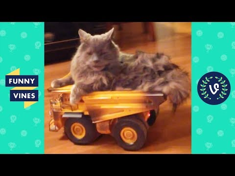 TRY NOT TO LAUGH - CATS That Will Make You LAUGH   Funny Videos September 2018