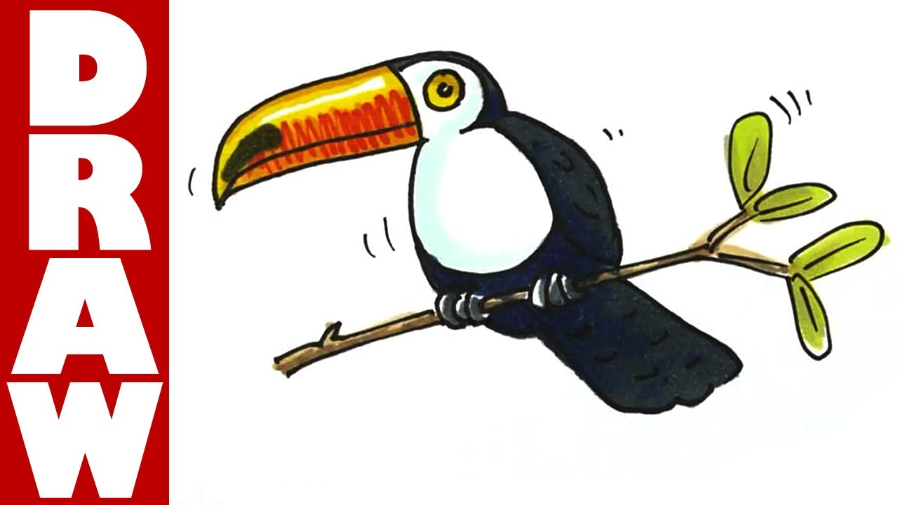 How to Draw a Toucan Flying How to Draw a Toucan