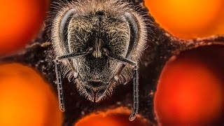 The first 21 days of a bee's life | Anand Varma